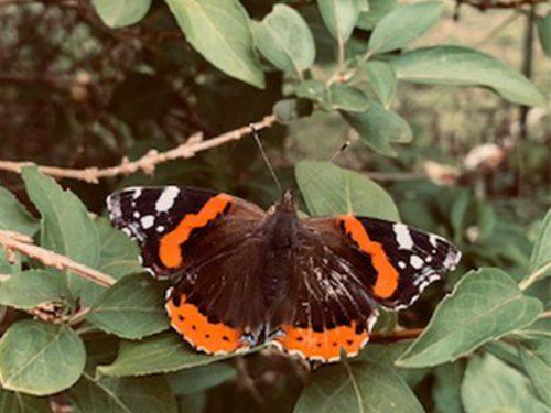 un papillon dans la nature pour expliquer l'effet budget vert